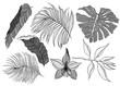 Tropical Jungle Leaves Illustration
