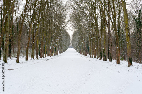 Tuinposter Weg in bos Pathway under the snow in the forest, Paris, France