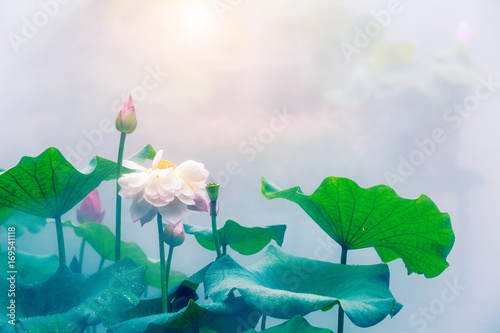 Foto op Aluminium Lotusbloem Blooming lotus flower and mist natural landscape