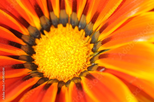 Fotobehang Pop Art flower