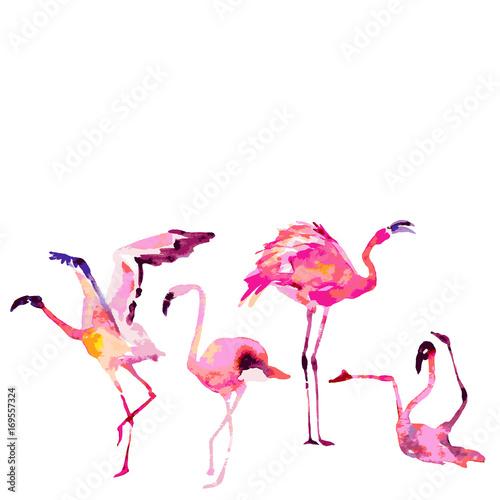 Canvas Prints Flamingo Bird Beautiful flamingos, isolated on a white. Big set.