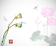 Lotus Flowers And Dragonflies ...