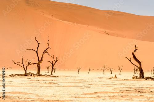 Fotografie, Obraz  Dead Acacia erioloba in the Dead Vlei (Dead Valley), Namibia Desert, Africa