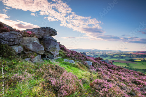 Foto auf Gartenposter Hugel Crags and Heather on Simonside Hills, popular with walkers and hikers they are covered with heather in summer, and are part of Northumberland National Park, overlooking the Cheviot Hills