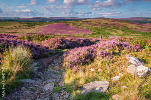 Fotobehang Heuvel Footpath to Simonside Hills, popular with walkers and hikers they are covered with heather in summer, and are part of Northumberland National Park, overlooking the Cheviot Hills