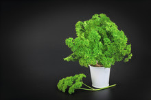 Organic Vegetable Parsley On Black Background With Copy Space
