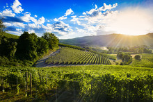 Spectacular Sunset Over The Green Vineyards Of Langa Piedmont, The Blue Sky Is Full Of Suggestive Clouds