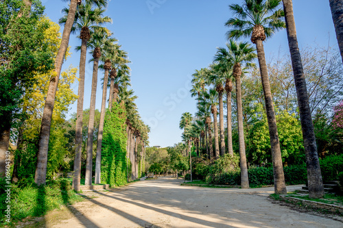 Foto op Plexiglas Cyprus A walking path surrounded by tall palm trees in a small public park in Nicosia city
