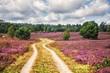 canvas print picture - Path through Lüneburg Heath, Cyclists