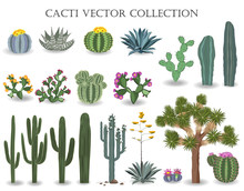 Cacti Vector Collection. Sagua...