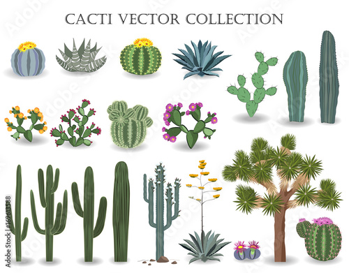 Fotografering  Cacti vector collection