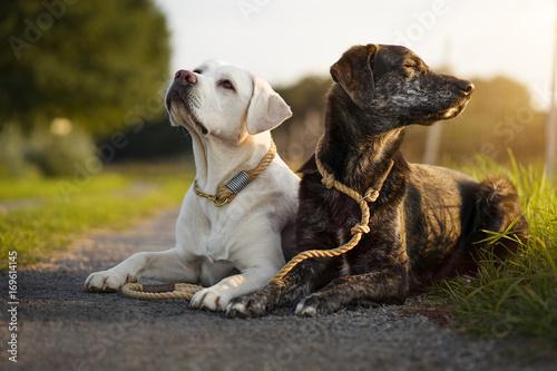 Photo Zwei junge hübsche Hunde mit Halsband und Leine liegen nebeneinander auf einem W