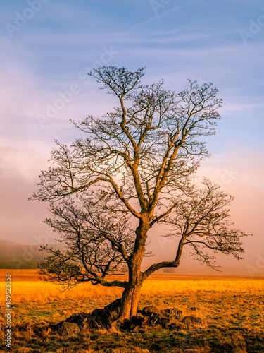 In de dag Bomen Colorful autumnal landscape after rain with beautiful tree, mist and blue sky. Dramatic scene.