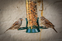 Moonrakers Birds