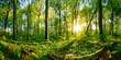 Leinwanddruck Bild - Sunset in the forest