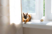 Squirrel Hiding Under Curtain ...