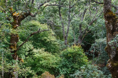 Bosque de robles melojos o rebollos y otras especies. Quercus pyrenaica. Parque Natural del Lago de Sanabria y alrededores. © LFRabanedo
