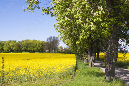 Tuinposter Meloen skåne landscape