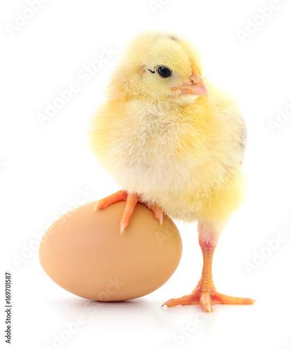 Keuken foto achterwand Kip Chicken and egg.
