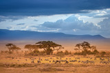 Fototapeta Sawanna - African Savannah. The foot of Mount Kilimanjaro. African animals.