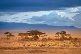 Fototapeta Sawanna - African Savannah. The foot of Mount Kilimanjaro. African animals.