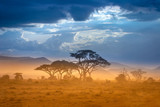 Fototapeta Sawanna - African Savannah. The foot of Mount Kilimanjaro.
