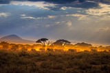 Fototapeta Sawanna - Migration of elephants. Herd of elephants. Evening in the African savannah.