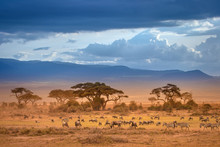 African Savannah. The Foot Of ...