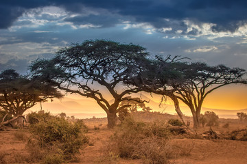 Evening in the African savannah. The foot of Mount Kilimanjaro.