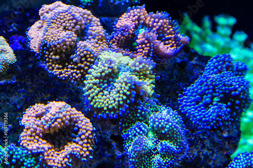 Staande foto Koraalriffen Ricordea florida Coral