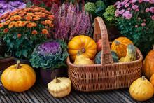 Thanksgiving Decor In A Garden