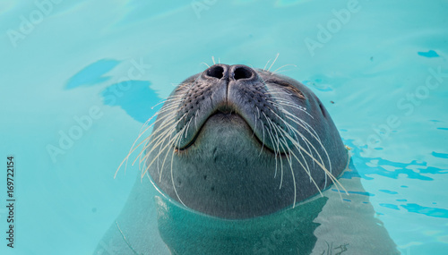 Cute seal in the water