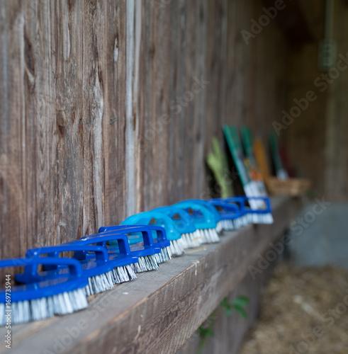 viele blaue buersten in reihe auf einem holzbalken im stall ...