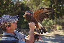 Falconer Touching Golden Eagle