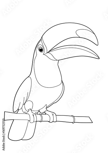 cartoon toucan - vector isolated coloring page - illustration for children