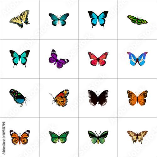 Fotografie, Obraz  Realistic Danaus Plexippus, Birdwing, Butterfly And Other Vector Elements