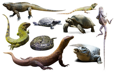 Fototapeta set of reptiles isolated