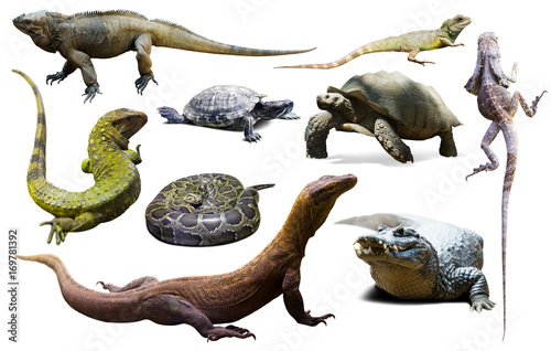 Poster Tortue set of reptiles isolated