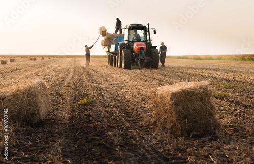 Fotografía Farmers throw hay bales in a tractor trailer - bales of wheat