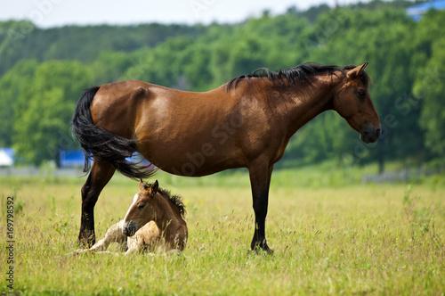 Valokuvatapetti horse