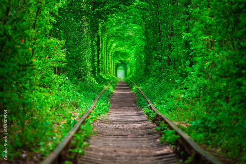Photo sur Toile Vert a railway in the spring forest tunnel of love