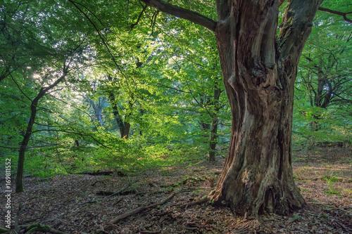 Zdjęcie XXL pnia drzewa