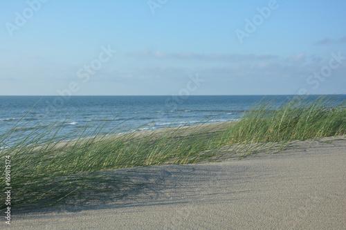 Spoed Foto op Canvas Noordzee Strandhafer im Wind - mit viel Sand und Nordsee
