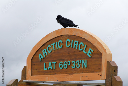 Crow on Arctic Circle sign northern Canada