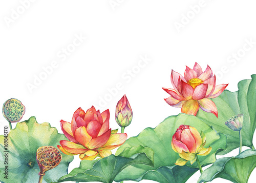 Banner border of pink lotus flower with leaves seed head bud banner border of pink lotus flower with leaves seed head bud water mightylinksfo