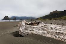Drift Wood Stuck On The Beach ...