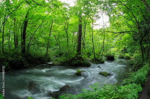 Wall Murals Forest 緑の青森県奥入瀬の清流