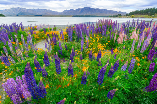 Deurstickers Groene Landscape at Lake Tekapo Lupin Field in New Zealand