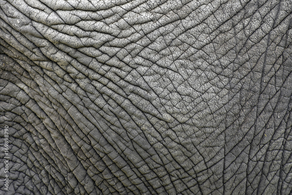 The skin texture of an old elephant