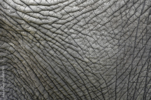 In de dag Olifant The skin texture of an old elephant